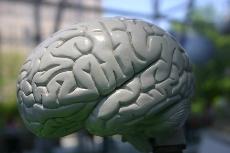 brain161123.jpg
