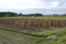crop131004.jpg