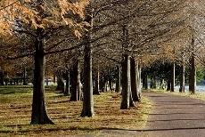 park141114.jpg