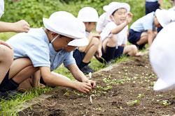 栽培活動に取り組む児童