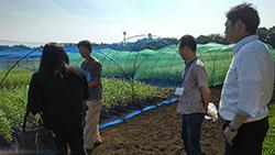 合志研究拠点の麦圃場。長い年月をかけて麦や蕎麦を開発する