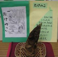 給食室の前に展示した皮つきたけのこの実物と説明。子供たちが興味深く見ていました。