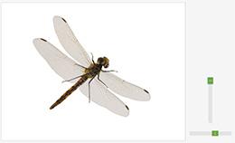 昆虫を3D回転させながら観察できる(理科)