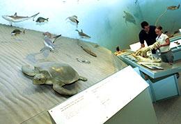ブリスベンのクイーンズランド州博物館で見られる展示物は2万点以上