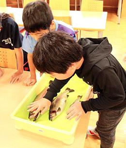 児童は初めて見るニジマスの眼球や歯などを恐る恐る触り観察