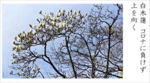中2国語の課題では自分が見つけた「春」を撮影して俳句にした