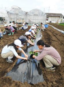 農業系高等学校の農場で実施された児童の農業体験