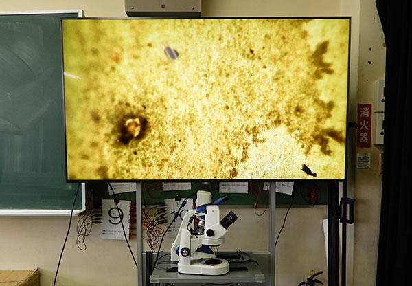 顕微鏡と接続して提示